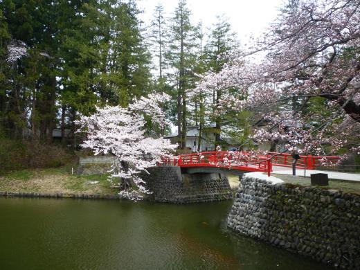 菱門橋の桜/