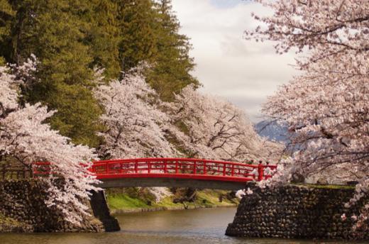 2015-4-21 松が岬公園の桜/