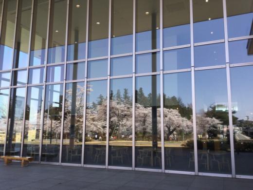 2015-4-23 伝国の杜に映る桜/