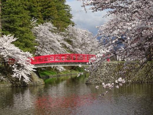 2016-4-14  松が岬公園の桜/