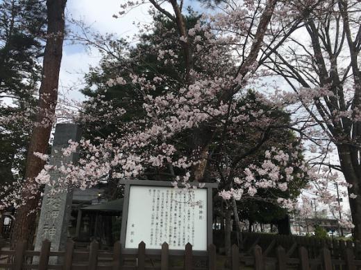 2019-4-19 松岬神社の桜/