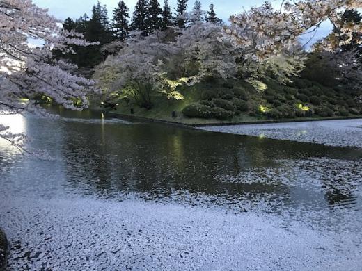 2019-4-25 上杉神社の花筏/