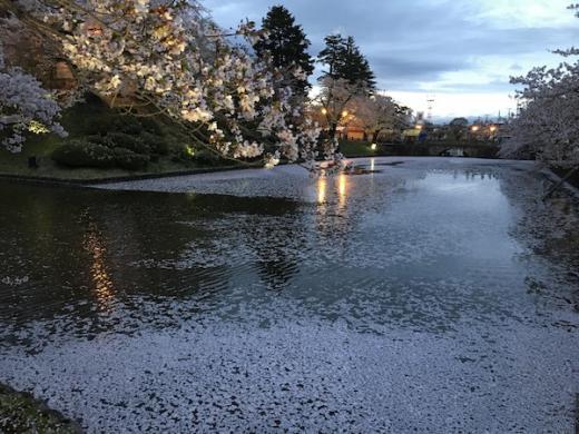 2019-4-25 上杉神社の夜桜/