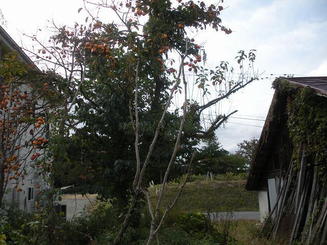 「秋のミステリー」の画像