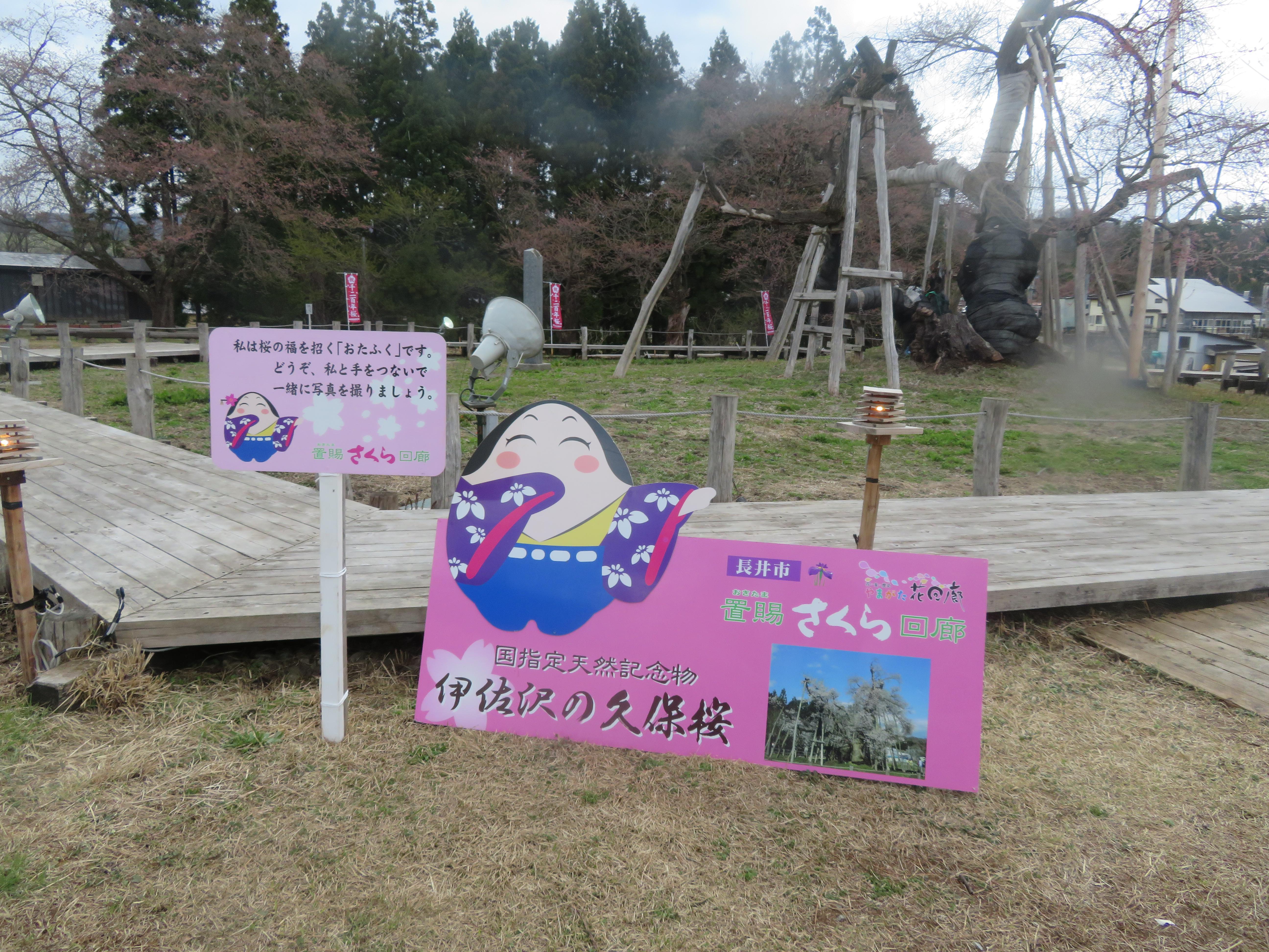 2018年久保桜開花情報