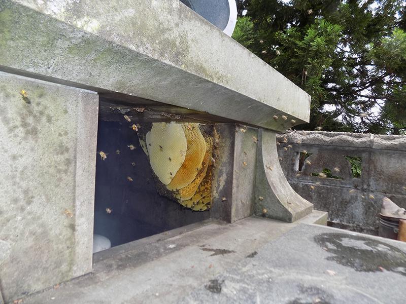 お墓にミツバチが・・・