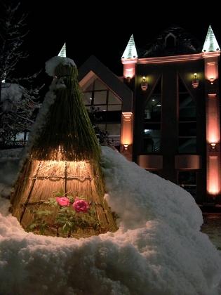 高畠町 まほろば冬咲きぼたんまつり 今週末まで!