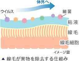 ウイルスから、身体を守る線毛:画像