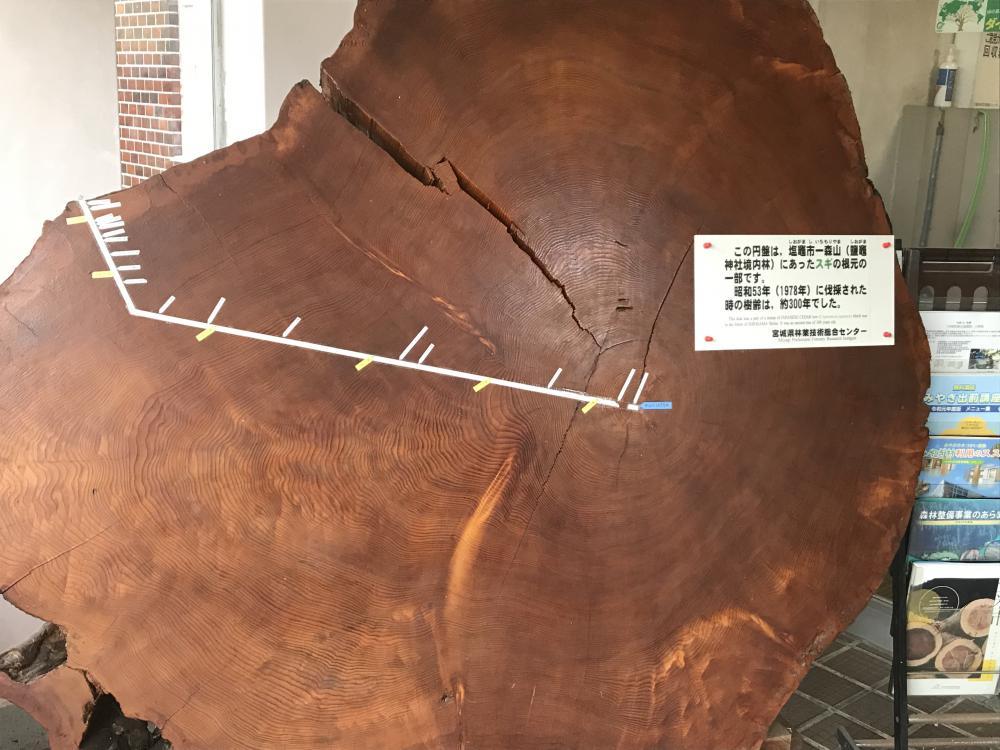 木の生命力:画像