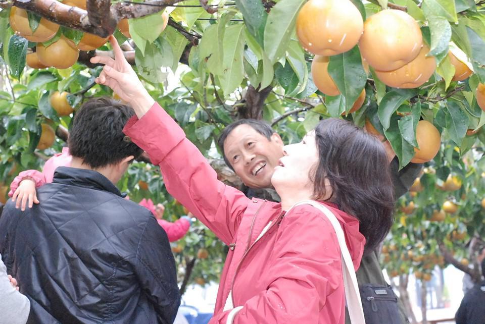 「梨もぎ取り祭」開催のお知らせ