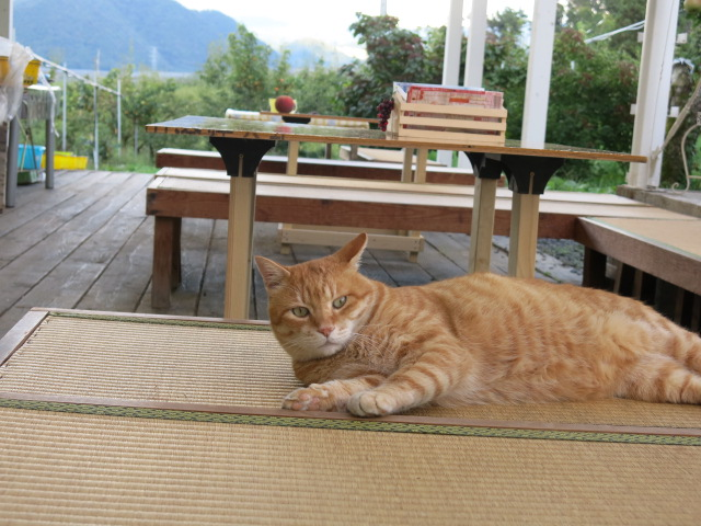 秋のくだもの狩り(ぶどう桃和梨りんごラフランス) 猫と一緒にお待ちしてます:画像
