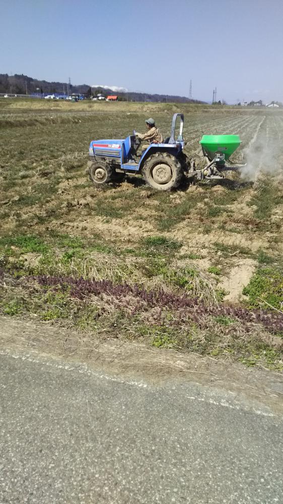 大豆畑の肥料散布