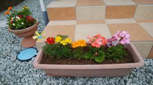 「玄関先にお花」の画像