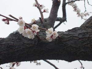 春作業開始