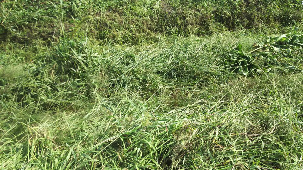 畦畔草刈り