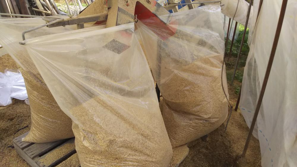 籾殻運搬:画像