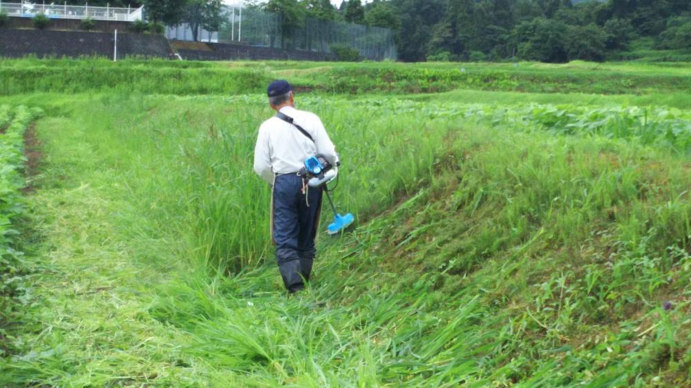 大豆畦畔草刈り