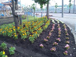 2012/06/28 09:06/先日四ッ谷地区の役員の皆さんと協力して花壇にきれいなお花を植えました♪