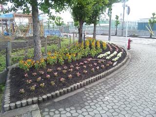 2012/06/28 09:08/花の種類によってもさまざまな色で楽しませてくれますね!