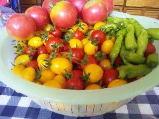 2012/08/28 06:29/一週間ぶりぐらいの収穫になってしまった