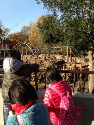 2012/11/29 06:15/お猿さんがたくさんいました♪