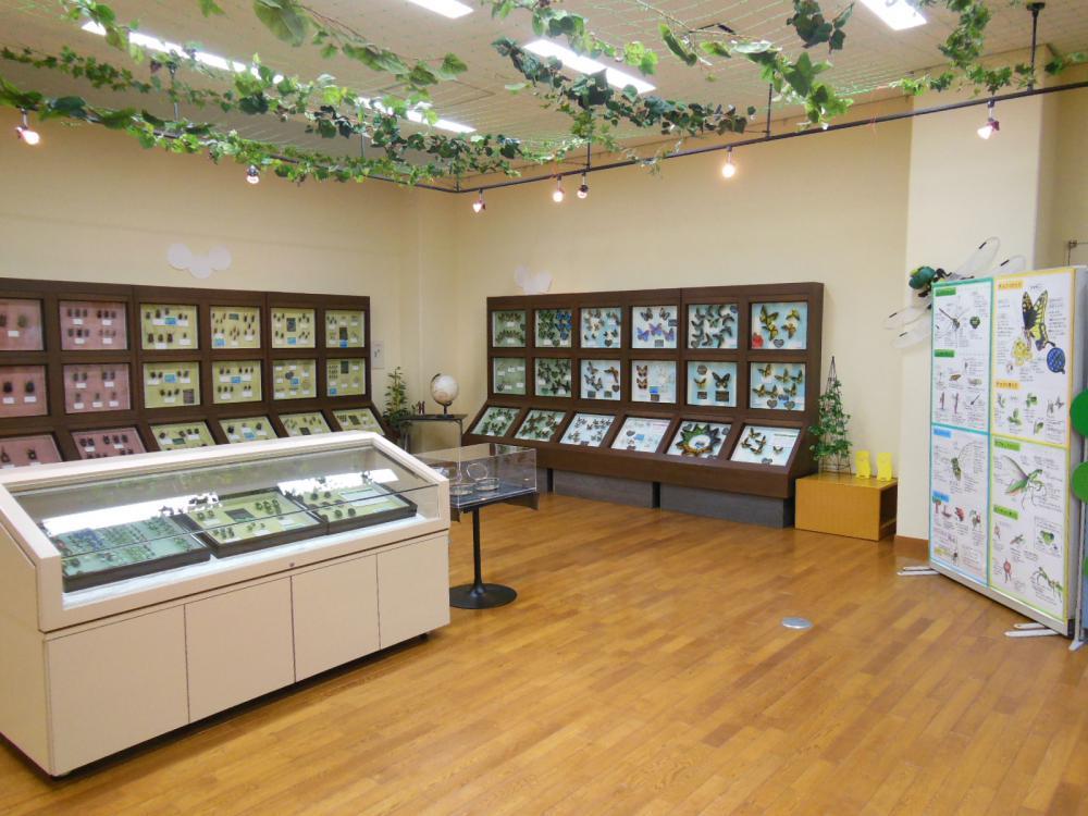 虫の季節がやってきた!常設展示・春の本格オープン!