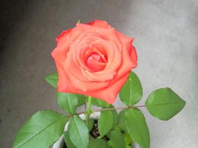 2010/08/26 23:19/お花の日の一輪挿しが・・!!