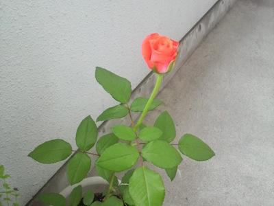 2010/08/26 23:18/立派に育ててもらってます〜。