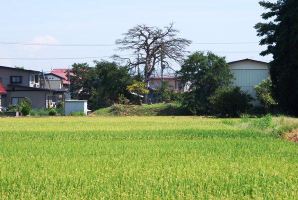 新山神社(小松城止)その1