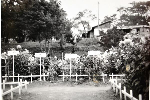 川西ダリヤ園その1