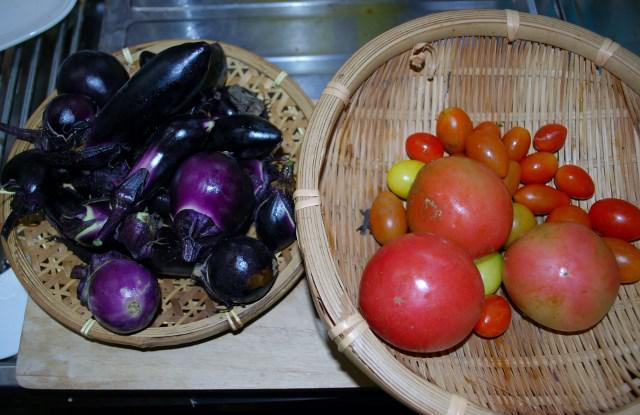 朝の野菜収穫