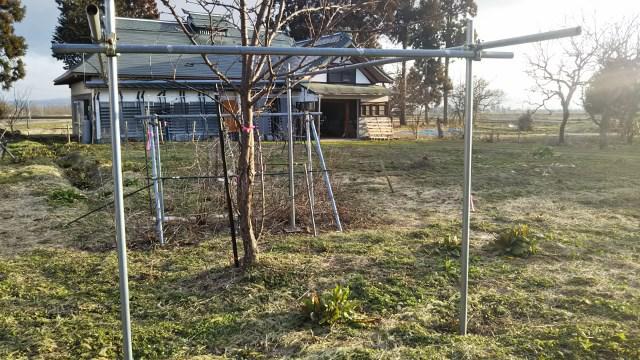 果樹の移動準備