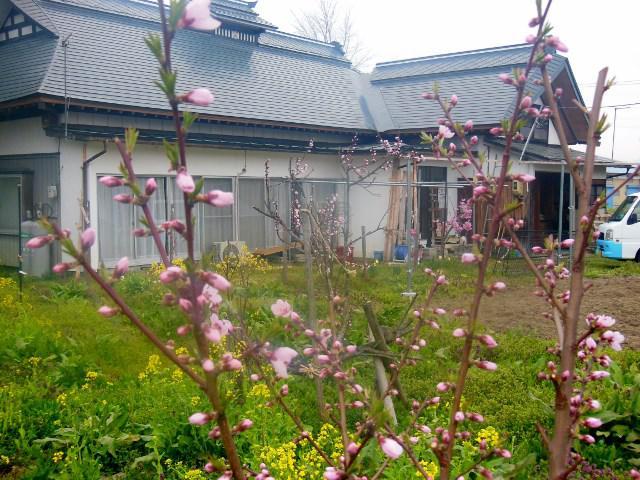 庭の花盛り
