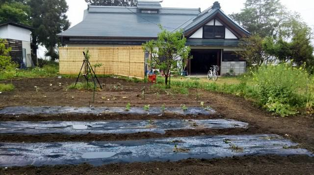 畑の植え付け