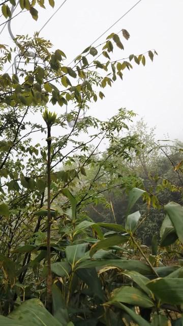 天元台で竹の子採り
