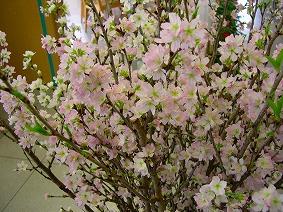 「啓翁桜」の画像