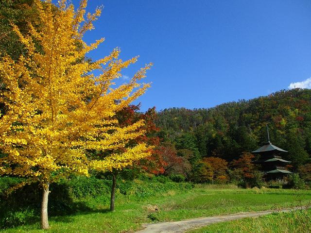 秋晴れ♪:画像