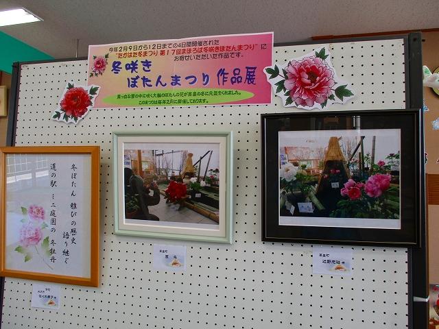 「冬咲きぼたんまつり作品展」開催中♪:画像