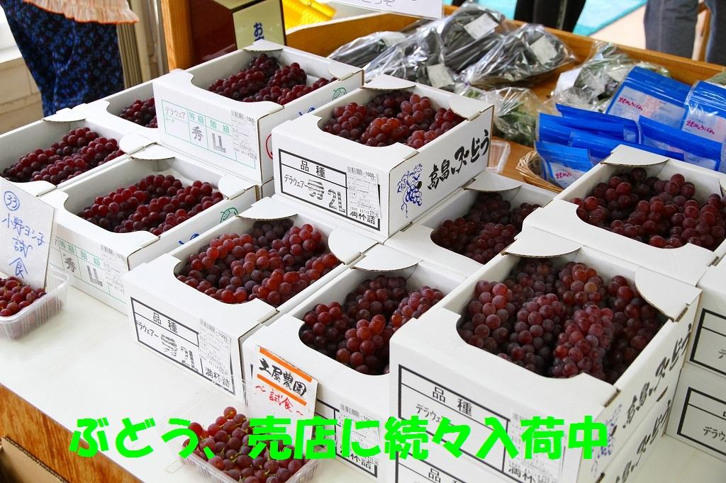 味道好的葡萄源源地是进货中的~♪:图片