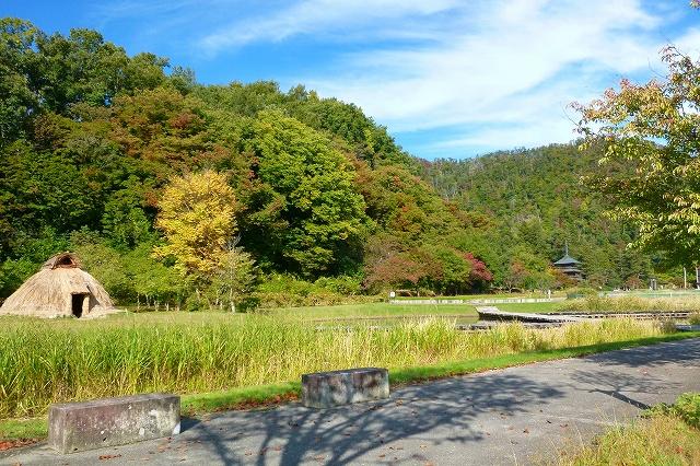 Autumn colors began ♪ : Image