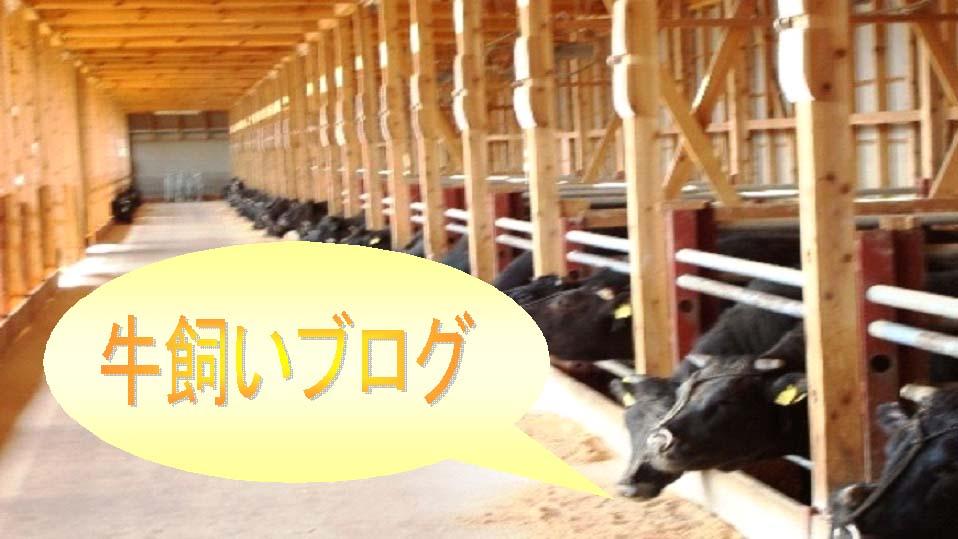 牛飼いブログ