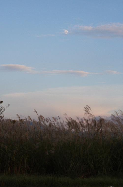 ようやく秋の夕焼け 東の空には三日月、夕日に映えるススキの穂もほんのり色づいている