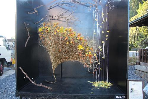 新しい菊の魅力を発見 南陽の菊まつりの再発見 見事なフラワーアート必見