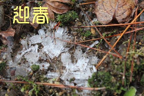 穏やかに正月3日 雪のない日が続いています 正月には珍しく霜柱が 何かいいことがあるのでは?/
