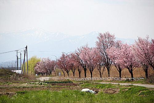 ネットで散歩 ぶらり自転車で残雪を抱く蔵王 飯豊 吾妻 朝日と山形県の名峰を見る