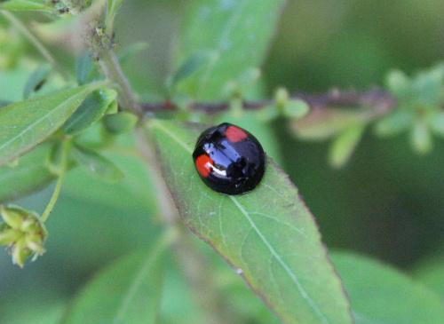 虫たちも初夏の暖かさに動き出しました 5月18日撮影