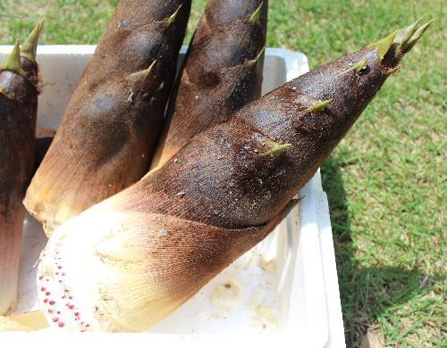うれしい 鶴岡市湯田川の知人から大好物の孟宗竹が届きました コロナ騒ぎで今年は買いに行けそうにないとあきらめていた ゆがかずにすぐに食べられる5月の旬の食材です 孟宗汁が楽しみ
