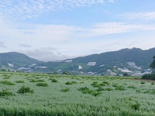 朝露に濡れた田んぼ 真っ青な空に白い雲と遠くに飯豊山 ツユクサ 這い出してきたカタツムリ そろそろ梅雨明けも近いのでしょうか/