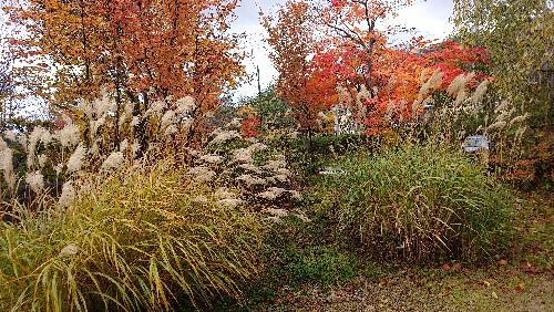 紅葉が一段と進み高い山から徐々に里に下りてきました 真っ赤な木の葉は秋の色です