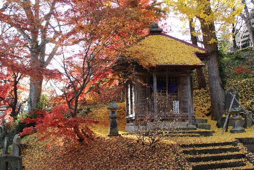 金色堂? 東東寺の観音堂のイチョウが真っ黄色に色づき冷たい西からの風にパラパラと落ちてきました イチョウがお堂の屋根や地面を多い、まさに黄金色と真っ赤な紅葉が一面に覆っています